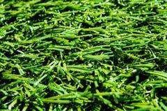 Variation av konstgjort gräs eller dess typer Fotografering för Bildbyråer