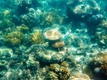 Variation av korall på den stora barriärrevet Arkivfoton