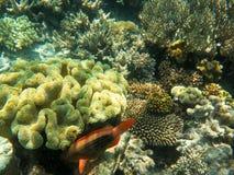 Variation av korall på den stora barriärrevet Royaltyfria Foton