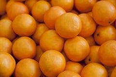 Variation av nya frukter, apelsiner Fotografering för Bildbyråer