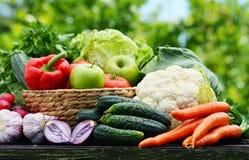 Variation av nya organiska grönsaker i trädgården Arkivbild