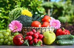 Variation av nya organiska grönsaker och frukter i trädgården Arkivfoton