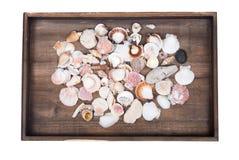 Variation av olika havsskal Royaltyfria Bilder