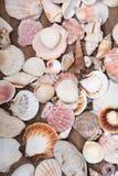 Variation av olika havsskal Royaltyfri Foto