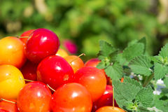 Variation av olika röda frukter: körsbär-plommoner Arkivbild