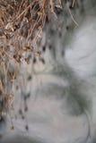 Variation av torkade örter på en gammal träbakgrund Royaltyfri Foto