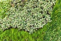 Variation av växter i vägg för lodlinjeträdgårdtextur royaltyfri bild