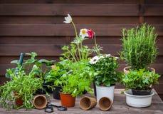 Variation av växter och blomkrukor med att arbeta i trädgården hjälpmedel royaltyfri fotografi