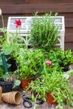 Variation av växter och blomkrukor med att arbeta i trädgården hjälpmedel arkivfoton