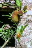 Variation av växtorganismer på ön av Bali natur av indonesia arkivbilder