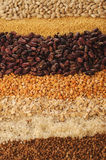 Variation of cereals. Close-up of various cereals, beans, buckwheat, rice, millet, corn flakes Royalty Free Stock Photography