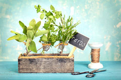 Variation of fresh herbs Stock Images