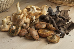 Variation of fresh wild mushrooms Stock Images