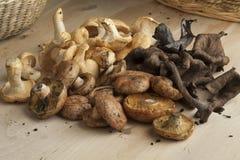 Variation of fresh wild mushrooms Stock Images