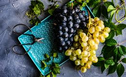 Grapes on the ceramic plate. Variation of grapes on ceramic plate on concrete background with copy space stock photo