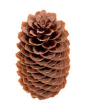 Variation on a theme of fir-cone Royalty Free Stock Images