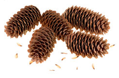 Variation on a theme of fir-cone Royalty Free Stock Photo