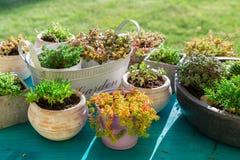 Variationer av suckulenten för stenträdgård royaltyfria foton