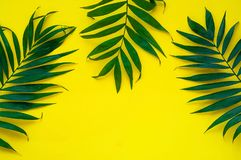 Variationer av tropiska palmblad på ljus textur Idérika tropiska sidor på gul bakgrund, kopieringsutrymme, closeup baner Arkivfoton