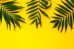 Variationer av tropiska palmblad på ljus textur Idérika tropiska sidor på gul bakgrund, kopieringsutrymme, closeup baner Royaltyfri Foto