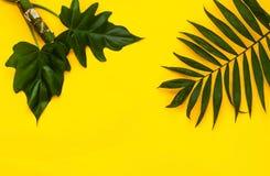 Variationer av tropiska palmblad på ljus textur Idérika tropiska sidor på gul bakgrund, kopieringsutrymme, closeup baner Fotografering för Bildbyråer