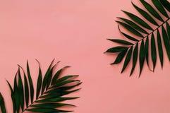 Variationer av tropiska palmblad på ljus textur Idérika tropiska sidor på rosa bakgrund, kopieringsutrymme, closeup Royaltyfria Bilder