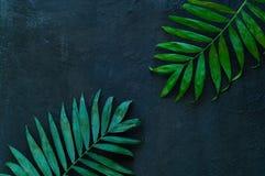 Variationer av tropiska palmblad på texturen av betong Idérika tropiska sidor på mörk bakgrund, kopieringsutrymme, closeup Royaltyfri Fotografi