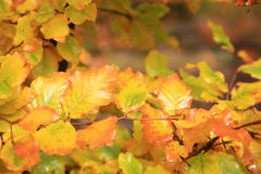 Variations d'automne. Art de nature. Photo stock