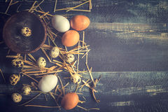 Variations of eggs Stock Images