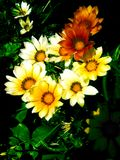 Variations of Yellow and White Flowers Stock Photo