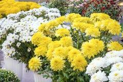Variationschrysanthemen in einem Blumenladen Weiß, gelb, Rot und stockfotografie
