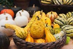 Variaty av konstiga dekorativa Haloween pumpor på säsongsbetonad marknad för bonde` s Arkivfoton