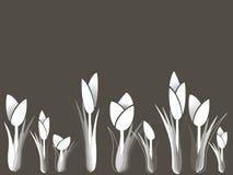Variazione dei tulipani Fotografie Stock