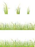 Variazione di erba Immagine Stock