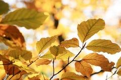 Variazioni di autunno. Arte della natura. Fotografie Stock Libere da Diritti