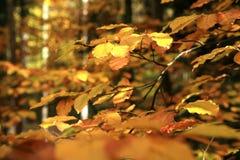 Variazioni di autunno. Arte della natura. Fotografie Stock