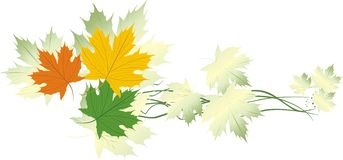 Varicolored maple leaves. Banner Stock Photos