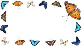 Varicoloured butterflies Royalty Free Stock Image