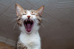 A varicoloured cat yawns on a refrigerator. Stock Image