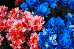 Varicoloured chrysanthemums. Bright paints of autumn are chrysanthemums Stock Photos