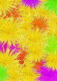 Varicoloured flowers Stock Photo