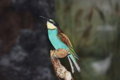 A varicoloured little birdie. Sits on a tree Royalty Free Stock Images