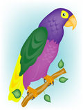 Varicoloured parrot on branch. Beautiful tropical parrot on branch tree Stock Image