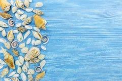 Varie conchiglie sul fondo blu dei bordi di legno Vista piana Immagini Stock