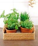 Varie erbe in cucina Fotografia Stock Libera da Diritti