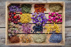 Varie erbe curative in scatola di legno, medicina di erbe Fotografie Stock