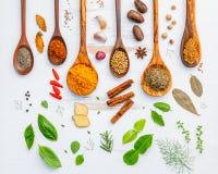 Varie erbe e spezie in cucchiai di legno Disposizione piana delle spezie dentro Immagini Stock Libere da Diritti