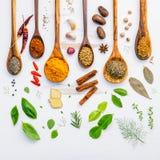Varie erbe e spezie in cucchiai di legno Disposizione piana delle spezie dentro Fotografie Stock
