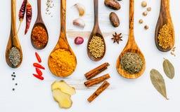 Varie erbe e spezie in cucchiai di legno Disposizione piana delle spezie dentro Immagine Stock Libera da Diritti