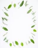 Varie erbe fresche dai rosmarini, dalla salvia, dal timo e dal pe del giardino Fotografia Stock Libera da Diritti